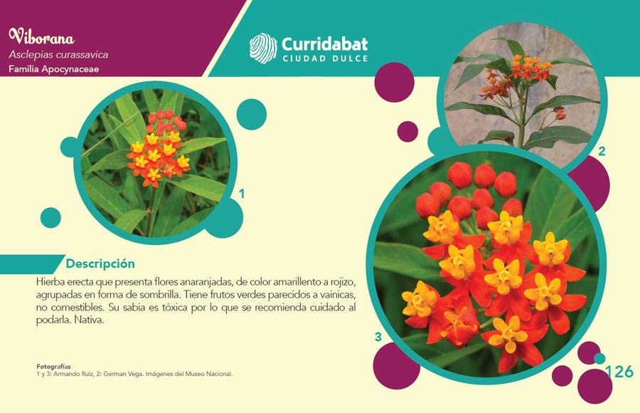 Plant description in Spanish_Source-Sweet Plant Guide